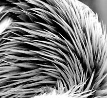 Feathers by Britta Döll