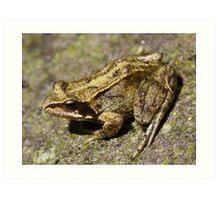 Common Frog - Rana Temporaria Art Print