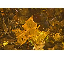 Fall Leaf in Water Photographic Print