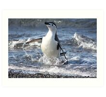 Antarctica chinstrap penguin back from fishing Art Print