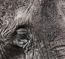 The Elephant's Eye by Britta Döll