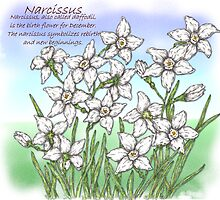 Narcissus by artbyjehf