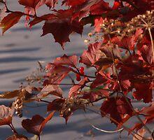 Rich Autumn by Britta Döll