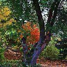Secret Gardens by Katagram