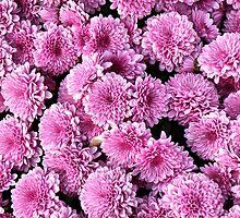Mums Pink by joan warburton
