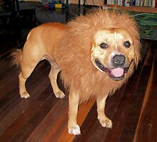 Woof or Roar? I'm confused by elsha