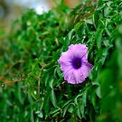Purple flower by evilcat