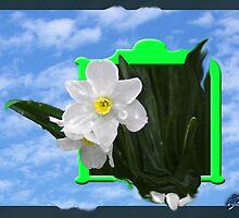 daffy box by budrfli