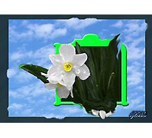 daffy box Photographic Print