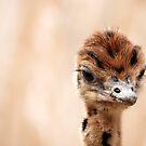 Feathered Friend by Carol Barona