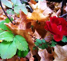 Autumn Rose by rocamiadesign