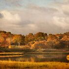 Autumn in Barnstable by bettywiley