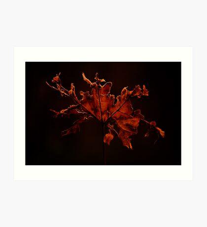 Battered Leaf Art Print