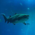 Shark Tank by vasu
