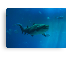 Shark Tank Canvas Print
