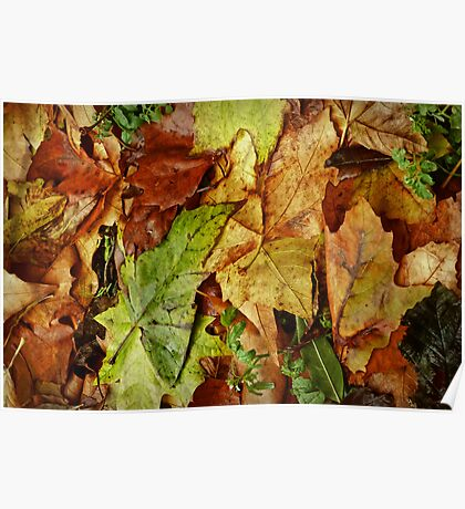 leaf fall Poster