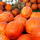 Pumpkins, Pumpkins, Pumpkins! - Manotick, Ontario by Debbie Pinard