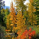 """Reflecting Colors"" by Lynn Bawden"
