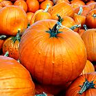 The Perfect Pumpkin - Manotick, Ontario by Debbie Pinard