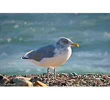 Seagull by the Ocean Photographic Print