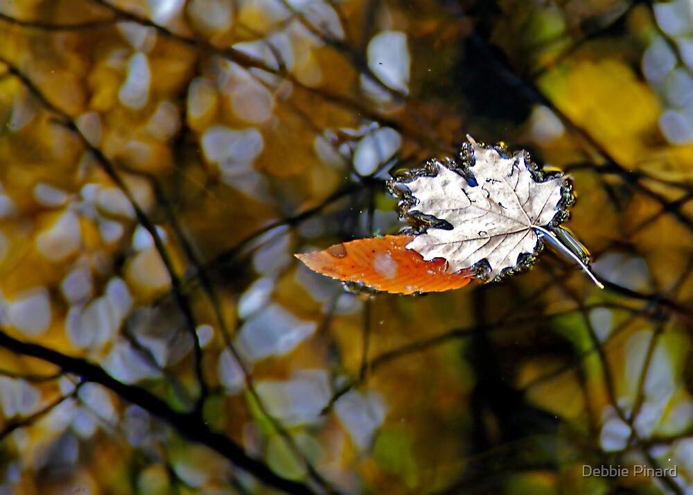 Canadian Fall by Debbie Pinard