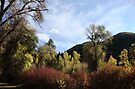 South Fork in October by Jan  Tribe