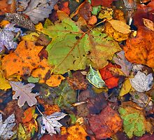 The Color of Fall by Monte Morton