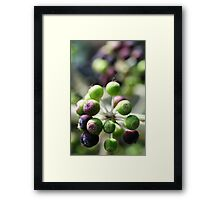 Green and purple berries Framed Print
