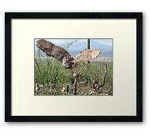 Great Horned Owl ~ Captive Framed Print