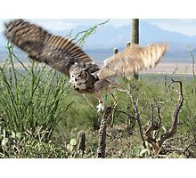 Great Horned Owl ~ Captive Photographic Print