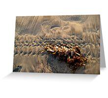 san diego seaweed Greeting Card