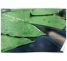 Close up of lily pad Poster
