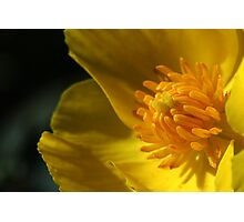 Yellow flower centre - macro Photographic Print
