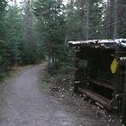 Another Little Cabin by Brady Flageole