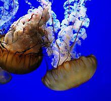 Jellyfish. by Amanda Brix