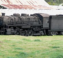 Dorrigo Train (1) by Margaret  Hyde