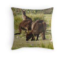 Grazing Kangaroos at Flinders Chase National Park, Kangaroo Island Throw Pillow