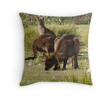 Grazing Kangaroos at Flinders Chase National Park, Kangaroo Island Throw Pillow