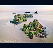 Critter Rock Shore by maventalk