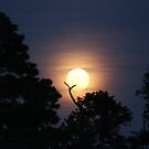 Blue Moon and Trees by virginian