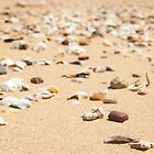 Shells Redcliffe / Scarborough by mandyemblow