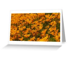 Poppies, Lovely Poppies Greeting Card
