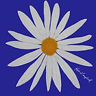 WHITE DAISY BLUE by RoseLangford