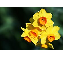 Daffodil close up Photographic Print