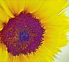 Sunshine by Susan Werby