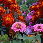 Flowerbed with Zinnias and Marigolds by SunriseRose