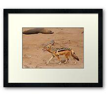 Black-backed Jackal ~ Namibia Framed Print