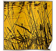 Reeds Yellow Poster