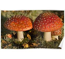 fly agaric: gnome real estate Poster