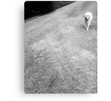 ♡ Dog ♡ Metal Print